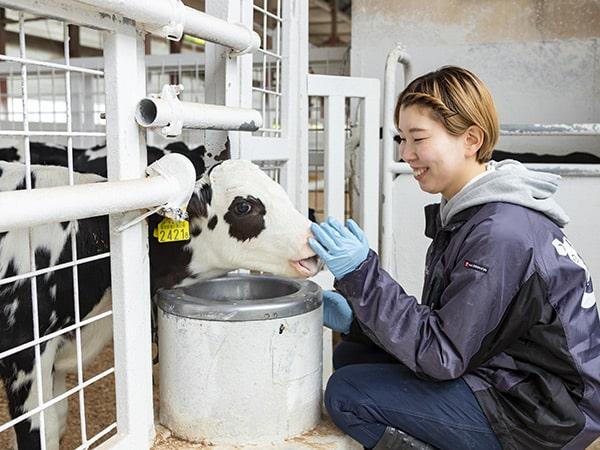 採用情報 カーフゲートでは仔牛哺育スタッフを募集しています